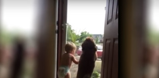 YouTube Hit: Toddler and dog – Daddy's home!