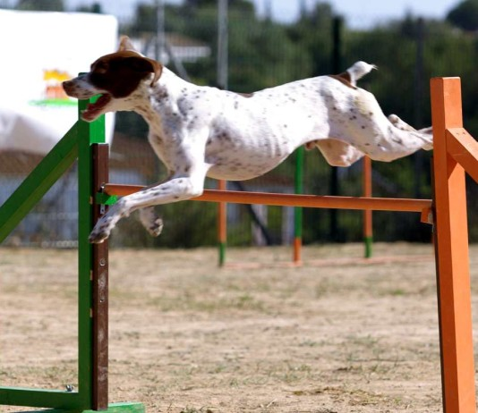 Freeimages-agility-Hundesport-Anbieter-urban-dog-1-1361063