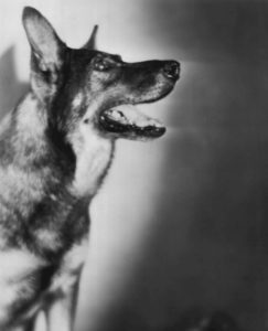 CC0-Wikipedia-Rin-Tin-Tin-1929