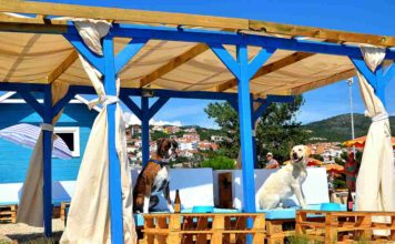 Monty's dog Hundestrand und Bar