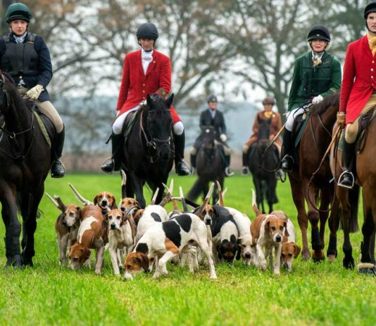 Jagd ohne tote Tiere