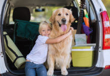 Hundetransport im Auto